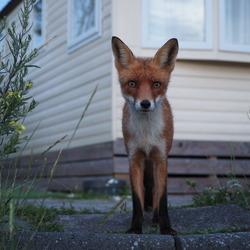 Mister Fox said hi