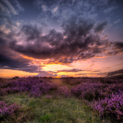 Experience the Heather