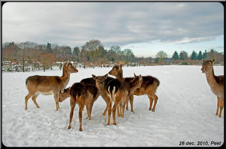 Herten - Herten, een foto van 2e kerstdag in 2010.