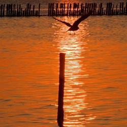 Sunset Waddenzee - 1