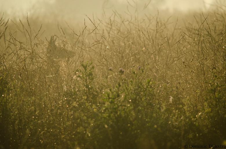 Spectres in the fog - Een ochtend in de Oostvaardersplassen. Tussen al het burl geluid door zit een groepje hindes verstopt tussen het struikgewas. Er