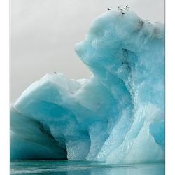 Frosty Birds