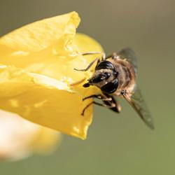 Zomaar een vlieg