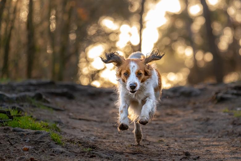 Razendsnel - Femke op volle snelheid in het bos