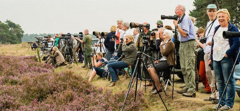 Edelherten fans - Vorige week op de wildbaan in het NP Hoge Veluwe geweest. Er stonden veel natuurfotografen en andere liefhebbers om de edelherten te