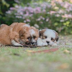 Puppystreken
