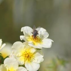 bloem met vlieg