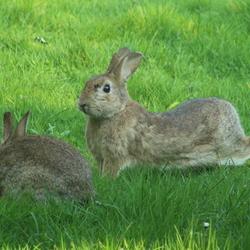 wilde konijntjes in de tuin