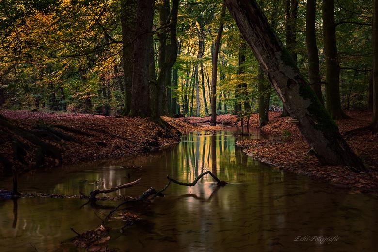 rustig beekje - een prachtig bos in de buurt van Harderwijk.