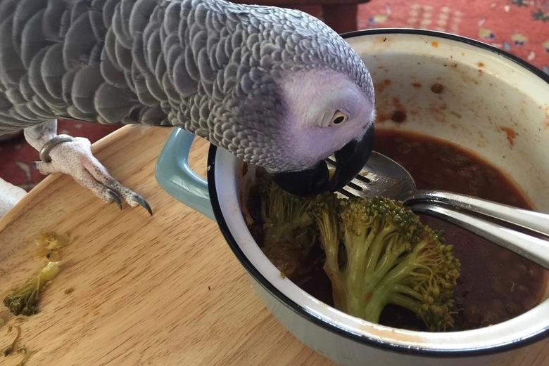 Ondernemende papegaai IMG_0594 - Je zult maar honger hebben en het eten van een ander interessanter