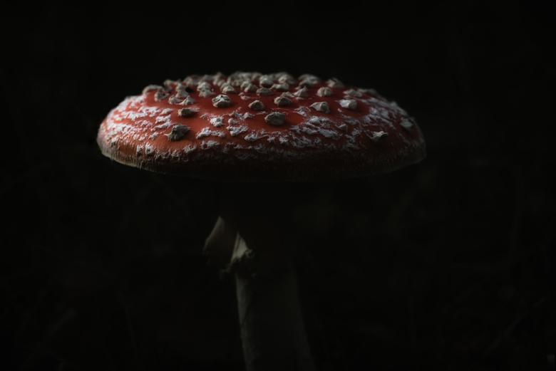 Dark Mushroom - Eens een lowkey shot geprobeerd bij een paddenstoel