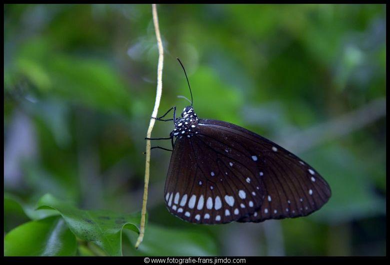 hanging on - genomen in de vlindertuin van het noorder dierenpark emmen.
