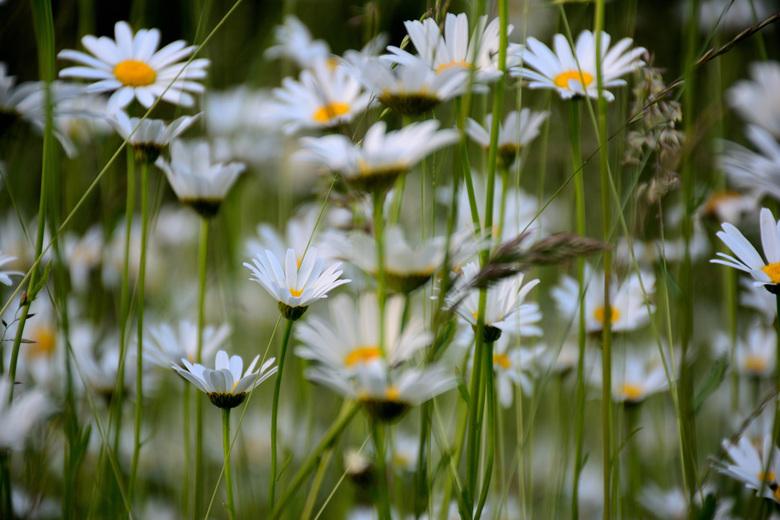 door de bloemen het bos niet meer zien