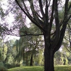 Park Elderveld