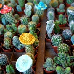 Kleine cactussen