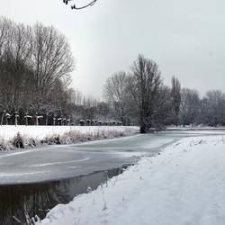 wilgen in de sneeuw
