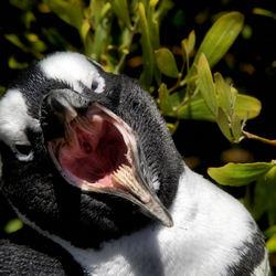 Pinguin Pride