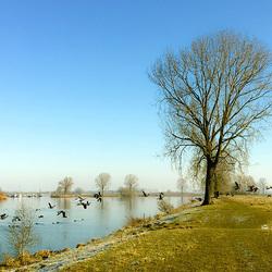 Rivier de Maas Ravenstein