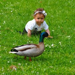"""1 """"Jayda en de eend"""""""