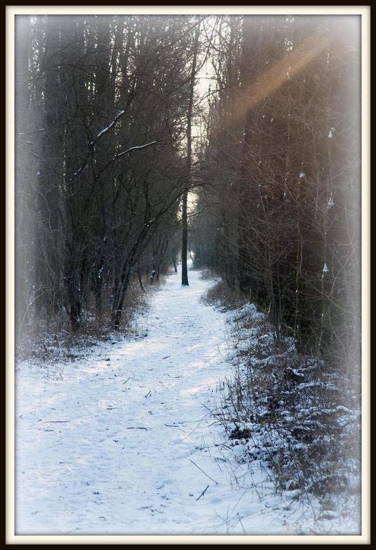 Geen  - Technisch gezien geen bijzondere foto. Wat mij opviel was het licht wat door de bomen scheen.