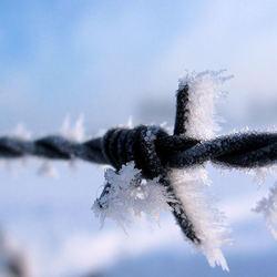 Prikkelende sneeuw