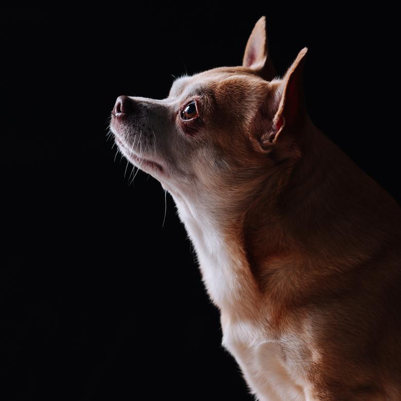 Boeffie - Vandaag kreeg ik dit hondje Boeffie op bezoek in mijn studio. Heel veel foto's gemaakt, zowel binnen en buiten de studio. Toch sprong d