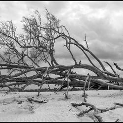 boomstronk tegen een dreigende lucht