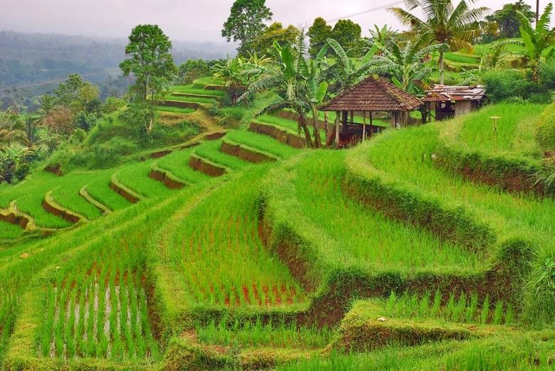Groene rijstterrassen - Op Bali vind je veel schitterende rijstterrassen. De mooiste van heel Bali (sommen zeggen zelfs: de mooiste van heel Indonesië