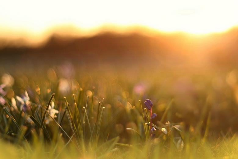 Wie het kleine niet eert... - Tijdens zonsondergang op mn buik tussen de bloemen gelegen. Heerlijk met deze temperaturen!