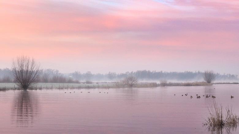 Winter ochtend - Een koude winterse ochtend. <br /> <br /> Als het koud is, 'breekt' het licht anders. Daarom zijn de kleuren van de zonsopkomsten e