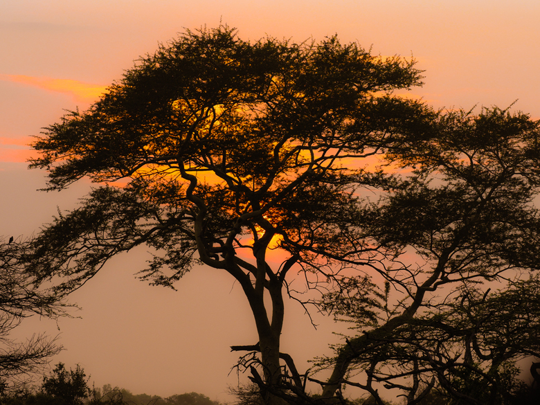 Bayalacamp_SA_sunrise - Ochtend safari in Bayala Camp SA.<br /> <br /> Vroeg uit de veren voor deze traktatie.