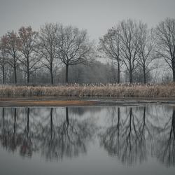 Winterse reflectie