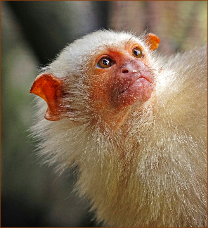 Aapje - deze aapjes waren moeilijk te fotograferen, ze zaten achter gaas met openingen van ongeveer 2,5 cm groot. gr. Nel