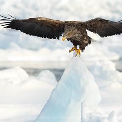 Op het topje van de ijsberg