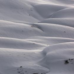 Sneeuwduinen