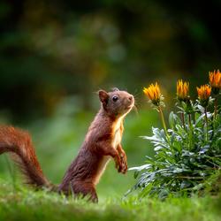 Eekhoorn en bloemetjes