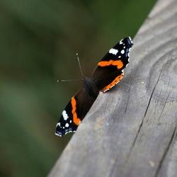 Vlinder op de leuning van een brug