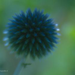 Blue . . .