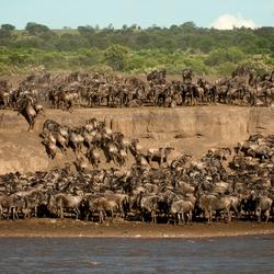 De Crossing over de Mara River - Tanzania