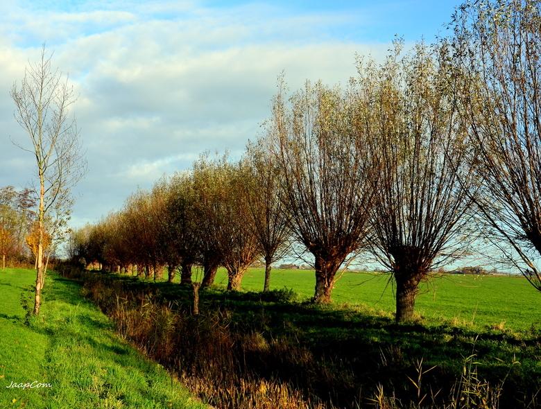 Landschap Knotwilgen - Deze foto genomen plaats Ijsselmuiden