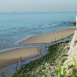 meeuwen op zandplaten