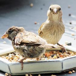 Vogels in de Tuin 4