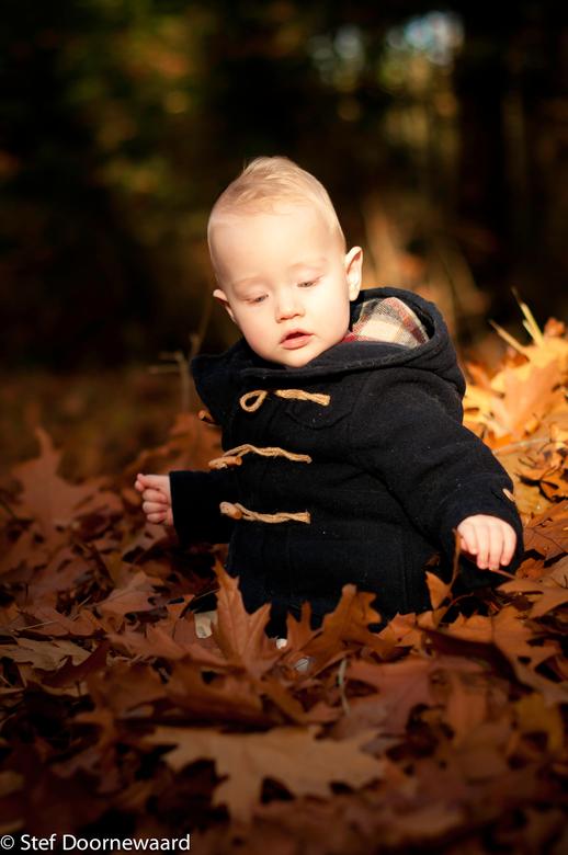 Playing with Leaves_autumn 2015 - Dit is de 2de van een serie foto's die ik genomen heb aan het einde van de dag waar de laatste zonnestralen nog