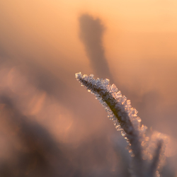 Frost and sunsets magical.