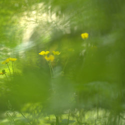 Yellow in green...