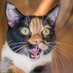 Miauw miauw miauw miauw!