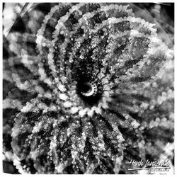 spiroflower 02