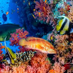 Kleuren Rode Zee