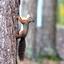 Eekhoorn kan de boom in.