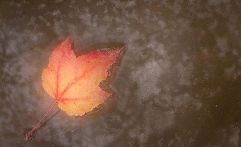 Autumn - Vier belichtingen, of beter gezegd 4 verschillende scherptedieptes... Dit was de eerste keer dat ik deze techniek probeer. Erg leuk! Hier kan